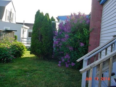 lilac bushes offer privacy for kitchen table windows