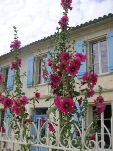 Photo for Magnificent fully equipped home, with port, vineyard and town