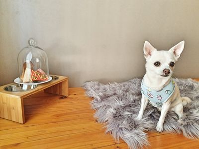 Photo for Pet-friendly BnB, 4km from city, includes free airport transfer