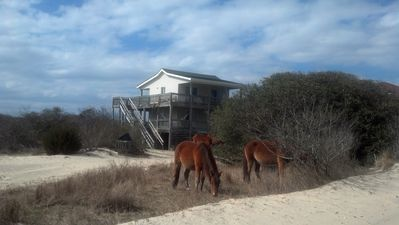View of house with Wild Spanish Mustangs in the front yard.
