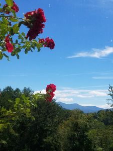 View from Hot tub - wake up and smell the Roses!