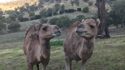 Photo for Two Camel B&B, Little River Road Tumut. 13km from town.