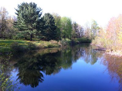 Large Pond in early Spring.  Crisp air, tadpoles and first Kingfisher sighting