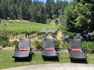 Lounging by the pool overlooking the vineyards
