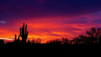 The best desert views to be had in some of the lushest Sonora High Desert!