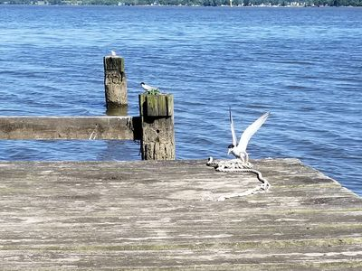 These little birds keep you company on the pier!
