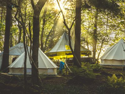 Photo for Wild Camp Night: Private Camp Experience | 4 Tents