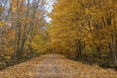 Go for a walk on the 1/2 mile private road, it's so peaceful.