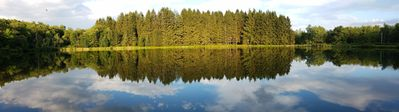 The pine forest across the lake
