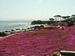 Lovers Point and the Magic Carpet