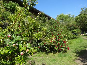 Search 62 holiday rentals
