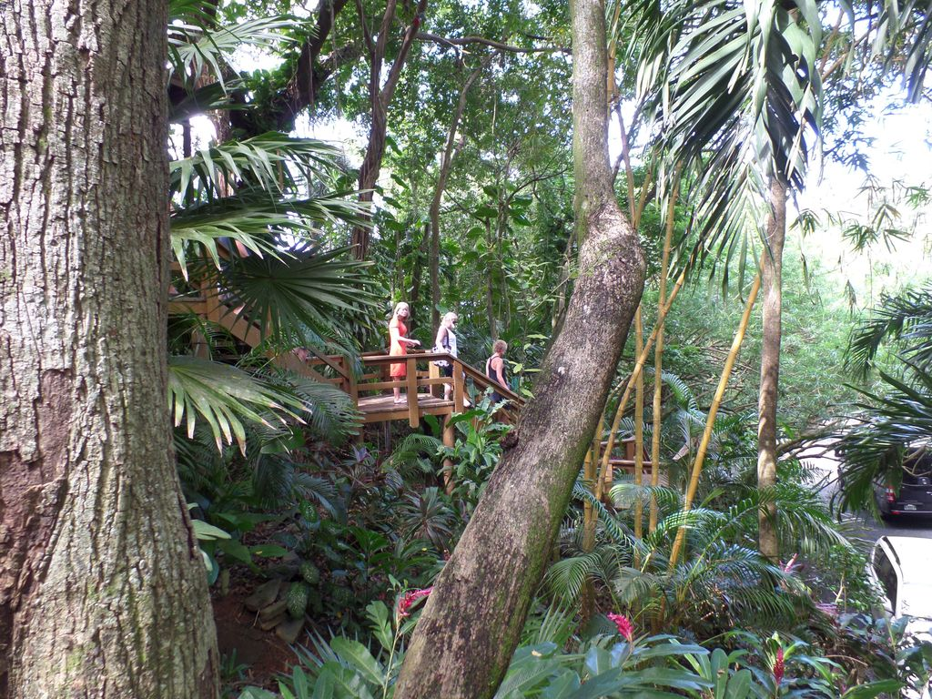 & SPECTACULAR JUNGLE CANOPY TREE HOUSE WITH W... - VRBO