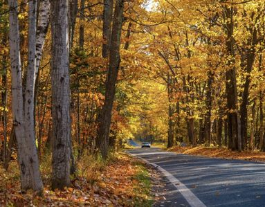 Michigan's ionic stunning tunnel of trees  color tour.