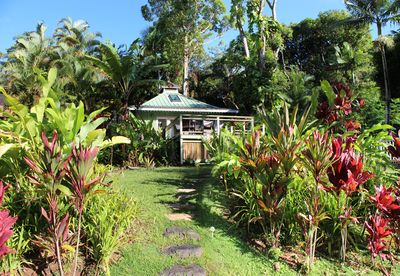 Perched on a bluff in a lush and ancient mango grove, sits the Hale Wainiha.