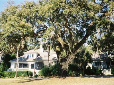 Huge Live Oak sits next to the deck and screened porch.