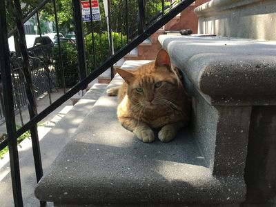 Photo for Cat lovers: 3-story Park Slope Townhouse with cat!
