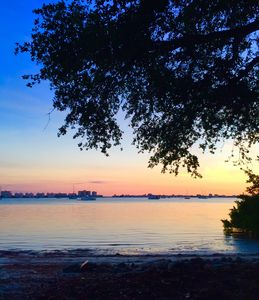 Photo for Peaceful Waterfront Cottage, Steps to Gulfport! Old Oaks Tall Pines Lush Yard.