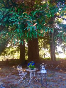 Victorian Village Cottage In The Redwoods! Walk To Downtown Ferndale!