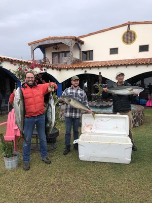 These guests caught 12 Yellowtail today--12-31-19. A group of 14 from Italy
