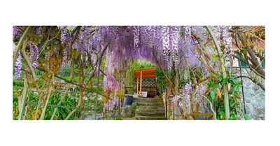 an impressive wisteria forms a natural tunnel at the entrance of the villa.
