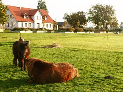 Photo for Lovingly renovated farmhouse on eco-farm - only 1 km to the Rügen ferry