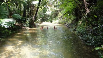 Lower Daintree, Queensland, AU