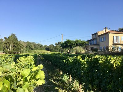 Photo for New! Very nice family house in the middle of the vineyards
