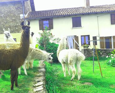 Photo for Gite nature Lamalpapoche surrounded by farm animals.