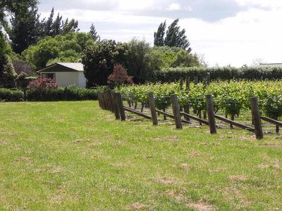 Photo for Rural Little Oasis Vineyard, Seddon near Blenheim,  wine tasting