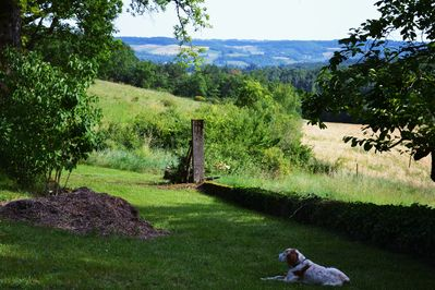 great views, dog is optional