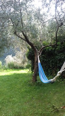 Photo for House with view among olive trees, walnuts and laurels.