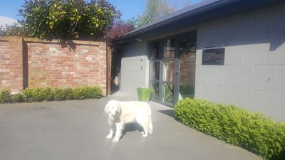 Large,modern, separate,self contained apartment. 2+carparks Friendly dog (Molly)