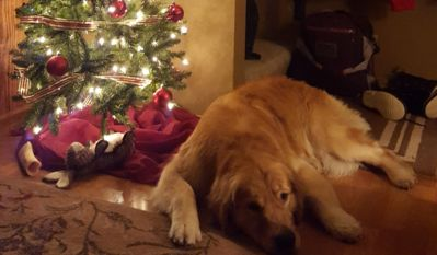 Waiting patiently for Santa!