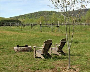 Photo for Serene Country Cabin On A 150 Acre Farm/Vineyard