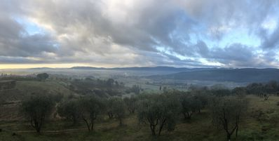 View of our olive grove