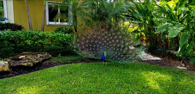 Photo for Tropical Private Paradise. Near Las Olas Dining, Shopping and Nightlife