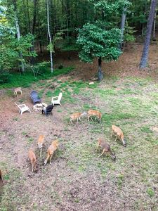Photo for Pay for 2 nights, get 1 free!  3/2  DEER Galore!