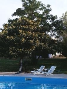 Photo for Villa with swimming pool, south of Bari: Appartamentino