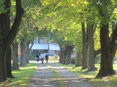 Large maple trees line the driveway, adding to the the privacy of the property.