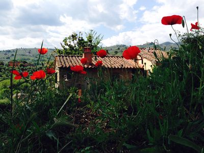 Photo for Private accomodation in typical tuscan farmhouse, halfway Lucca/Florence