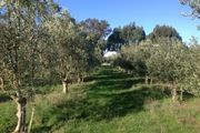 The General Store - set in an olive grove