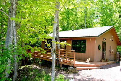 Cabin in the summer -- Dog friendly!