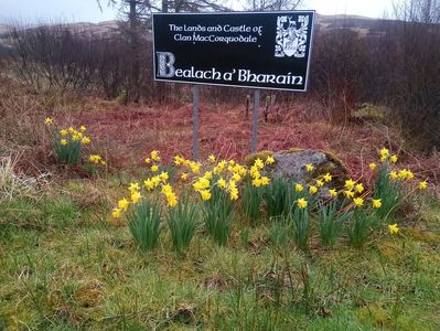 Daffy round our old road sign at Estate entrance.