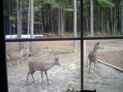 Look what we saw out the master bedroom window one morning!