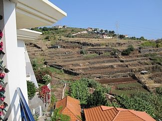 Typical Madeiran terraces