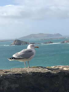 Photo for 150 year old cosy modern Holiday Cottage located close to Dingle
