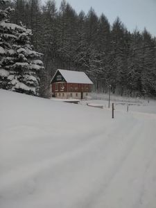 Next to the forest in the winter