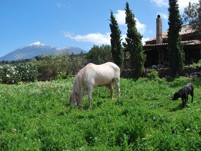 Photo for Beautiful rural house, with stunning views of Mount Teide