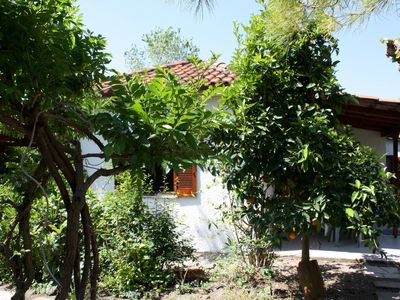 Photo for Calm located, amid an olive grove, close to the beach, wifi | holiday house Ilia