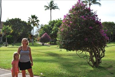 Koa Resort 5 Acre grounds. Welcome to our Paradise!  Mahalo for looking!  -Cindy